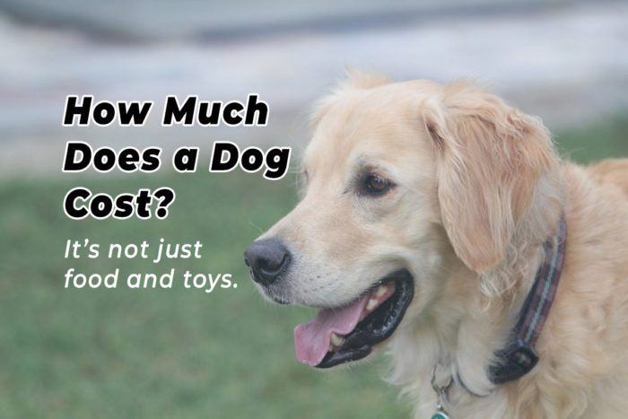 How much does a dog cost?